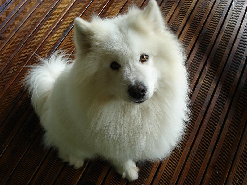Rencontre chien furet